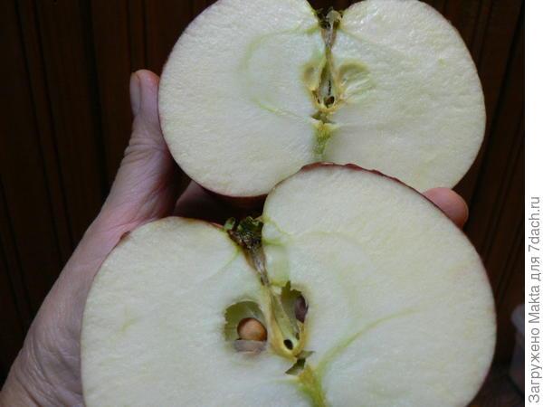Срез плода