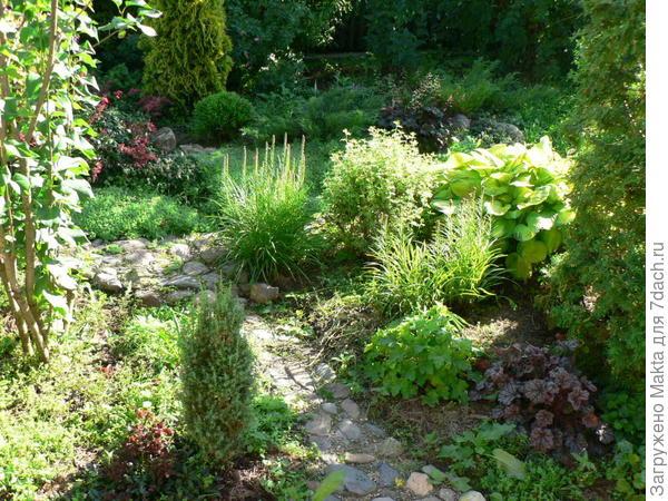 Пустое место за зеленой гейхерой - там рос белый лиатрис