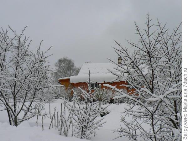 Зима, побеги видны