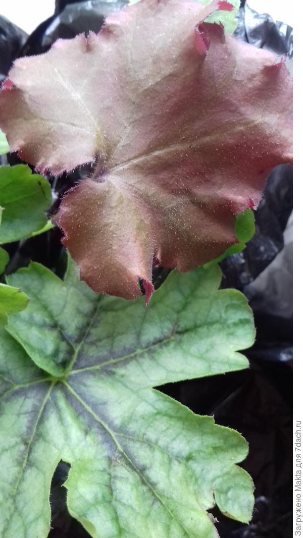 Листья приобретенных растений