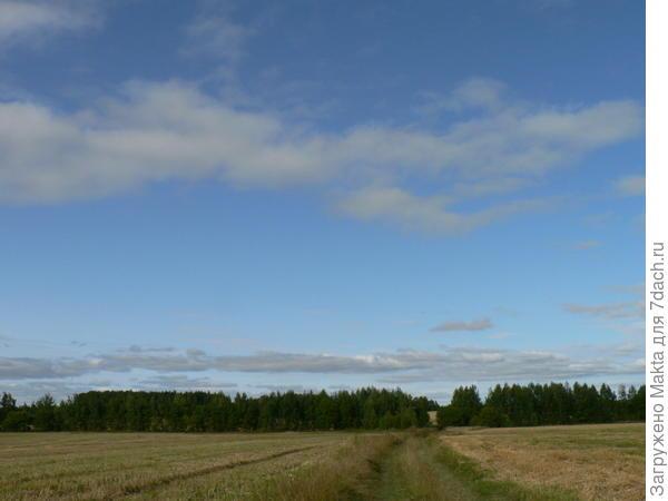 Дорога мимо овсяного поля