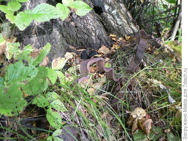 Оконная решетка срослась с деревом