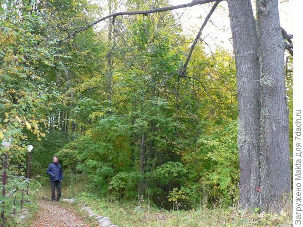 Правее лестницы можно подняться по более пологому склону среди деревьев