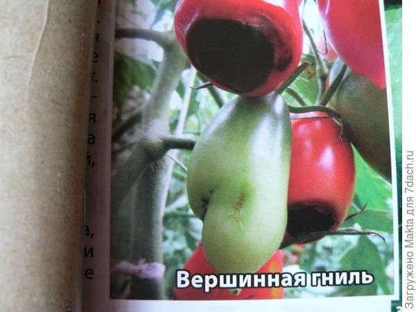 фото из каталога Мязиной