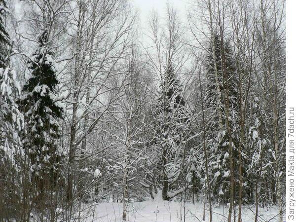 Зима началась