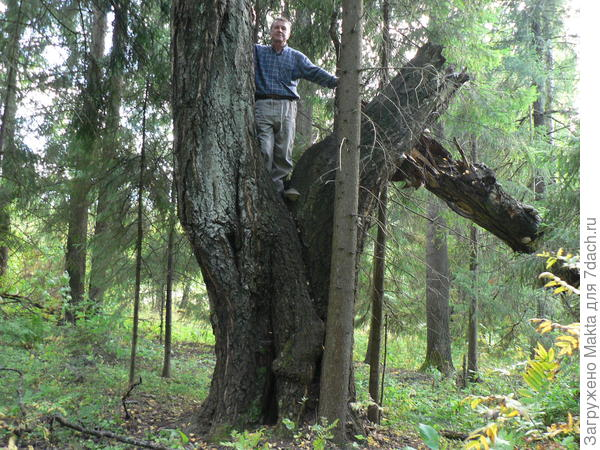 Нашли причудливое дерево