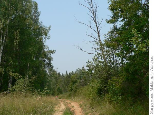 След медведя нашли прямо в тени леса слева