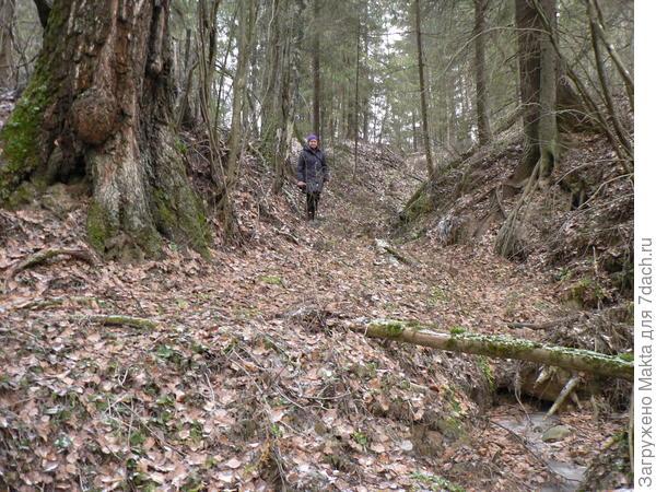 Вот такой лес