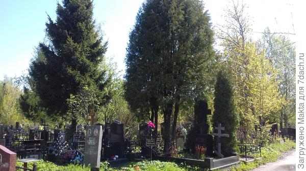 Эти же деревья издали