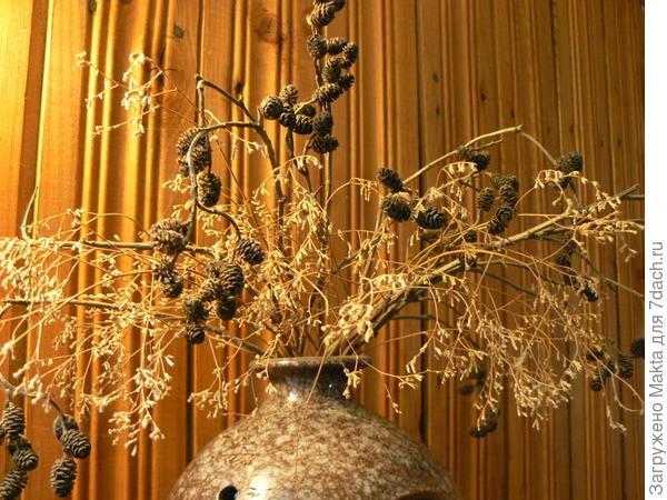 Ветки серой ольхи в сухом букете