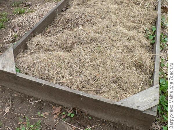 Грядка- короб высотой 15 см в одну доску