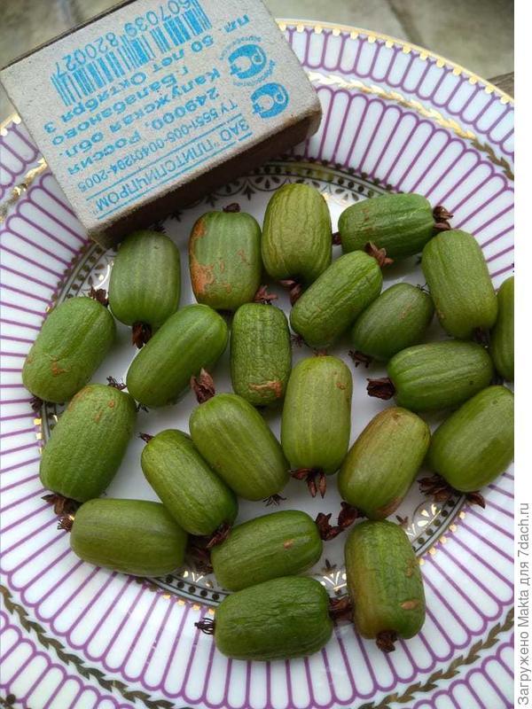 Ягоды, безусловно, не товарного вида, но вкусные. 9 сентября.