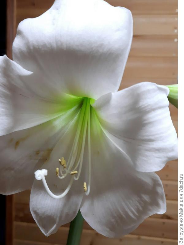 Цветок, один из четырех