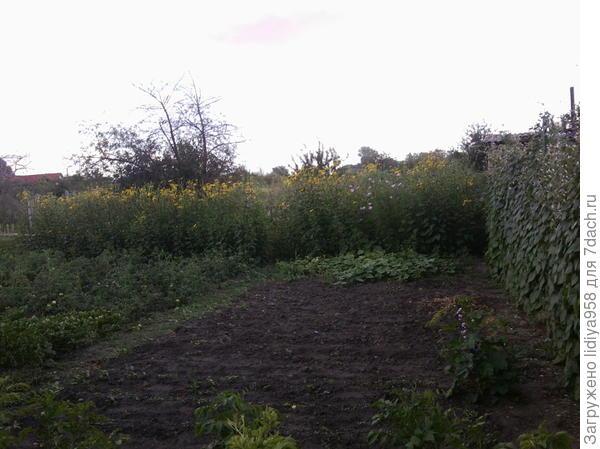 """""""Стена"""", которая отделяет сад от огорода."""