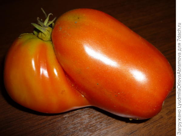 Вот такой помидорчик!