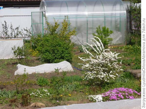 весна в саду