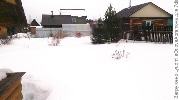 Вот только где же это мои крокусы-тюльпаны... Что-то пока не видать...:(:cry: С утра было -8, в саду уже -4, это после обеда. В доме - -1. Снега - море!