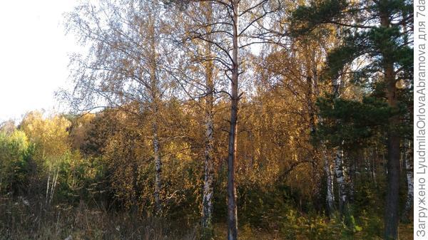 Это лес вокруг сада.
