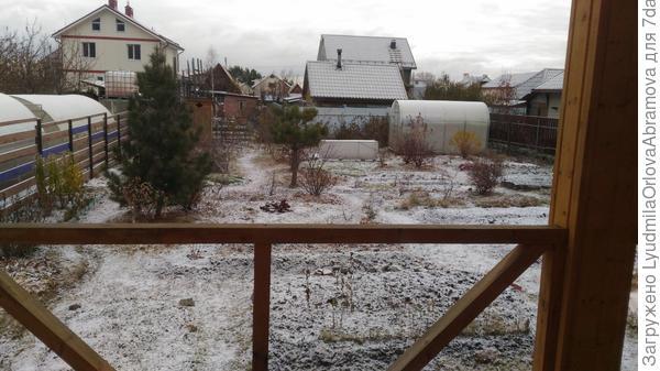 Выглянула утром в окошко - снежок лежит... Вчера ещё не было, хоть и порхали весь день редкие снежинки. На термометре -5.
