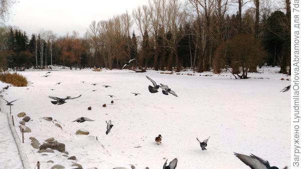 И тот же парк, и тот же пруд...