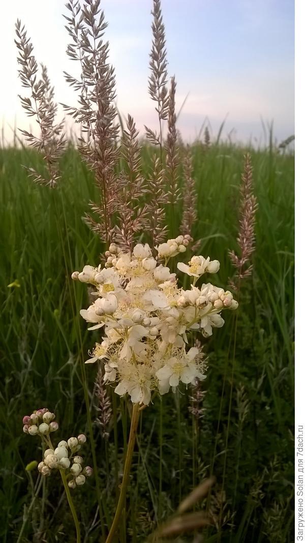 Травы соревнуются друг с другом за первенство по красоте))