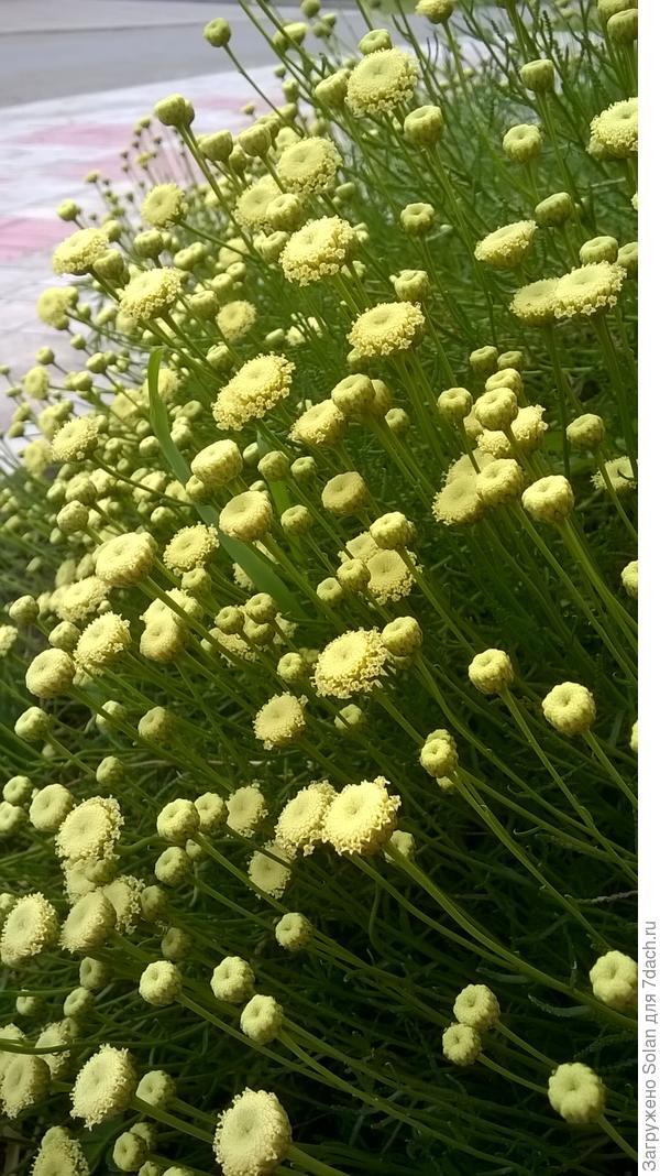 цветы вблизи
