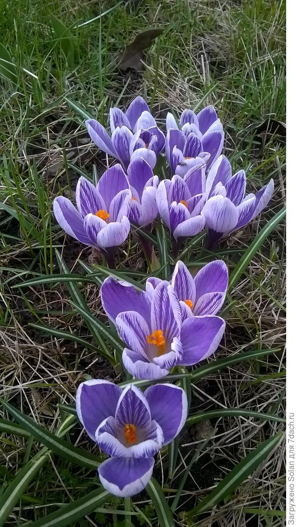 Катя, пусть весна для тебя наступит немного раньше! Поздравляю с огромным удовольствием))))!