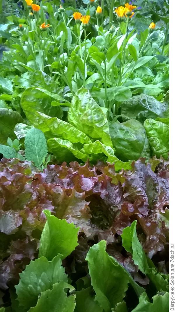 и ты же любишь зеленые салаты)))))