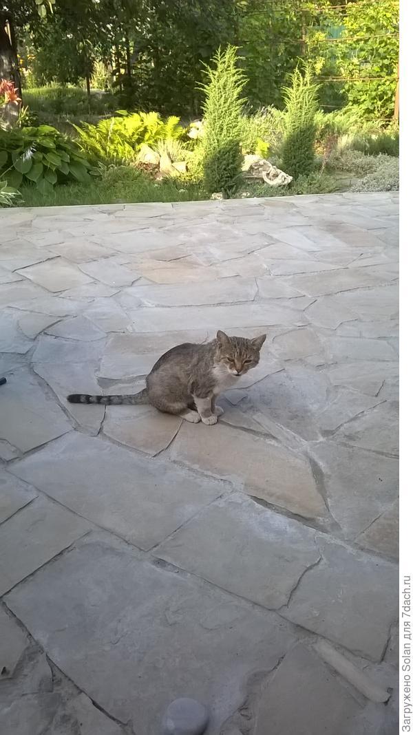 На месте сварливо квакающего кота (зовет меня завтракать на лавочку и пить кофе) будет стоять когда-нибудь, надеюсь, что в конце августа, круглый стол, пока без скатерти)))
