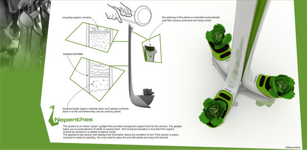 Nepenthes – домашний огород и мусорное ведро в одном флаконе. Фото с сайта http://www.designdebut.ru