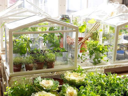 Мини-теплица от IKEA. Фото с сайта http://thegreenhead.com