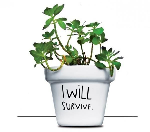 Кашпо I will survive. Фото с сайта http://www.arktis.de