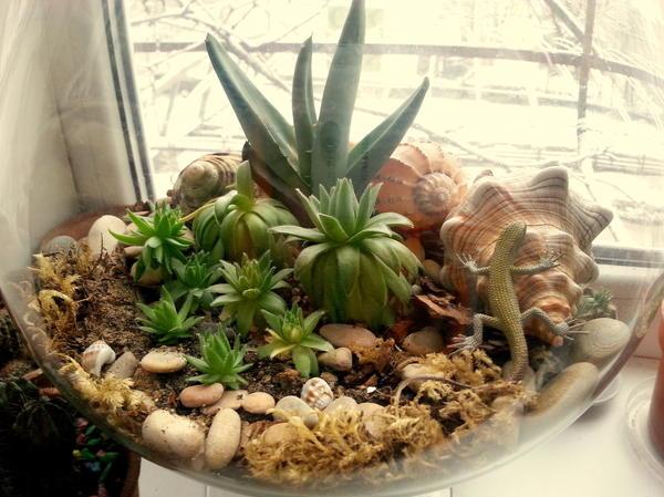 Мини-садик из суккулентов в стеклянной рюмке