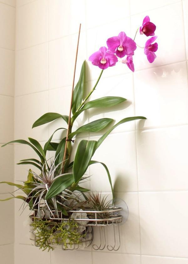 Фаленопсис в ванной. Фото с сайта http://hgtvgardens.com