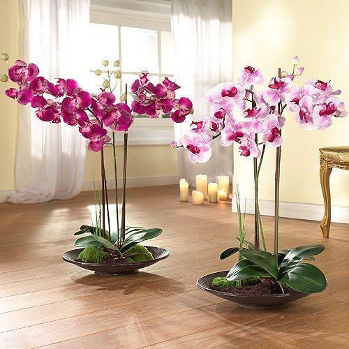 Фаленопсисы в широких плошках. фото с сайта http://img.yinnyang.ru