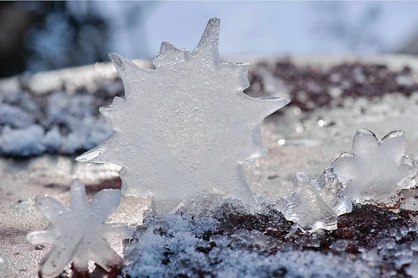 Ледяные звезды
