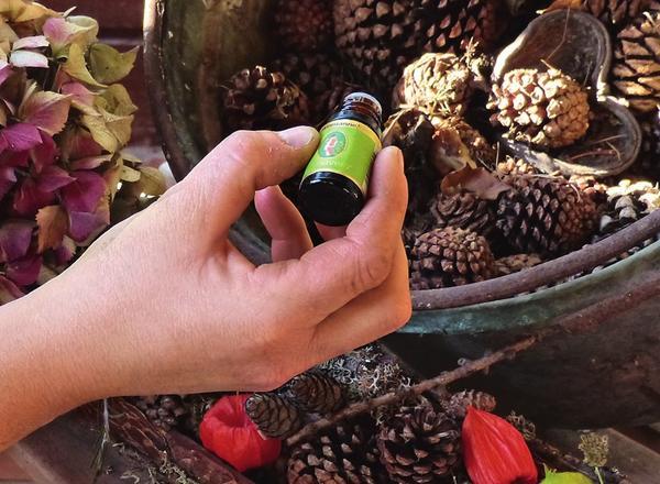 Капните несколько капель эфирного масла на шишки или кусочки коры