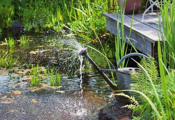 Мини-фонтан из лейки. Фото: Elke Borkowski