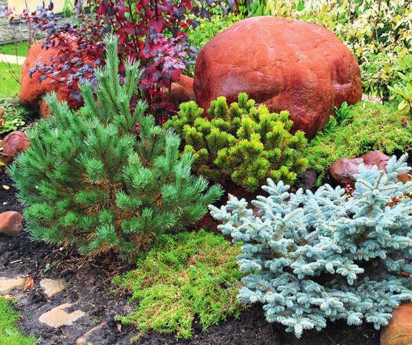 Яркоокрашенные валуны — один из возможных акцентов в «колючем» саду.