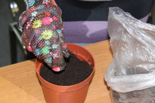 В грунт для роз нужно добавить землю из своего сада для адаптации.