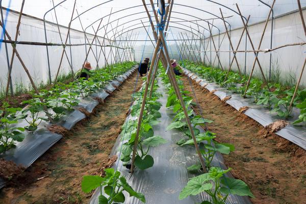 Защита растений в парниках и теплицах