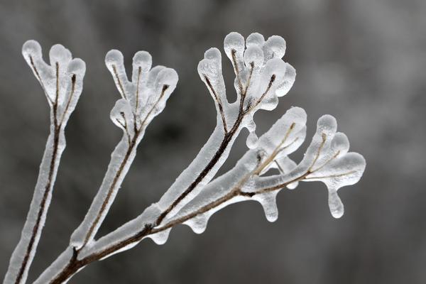 Метод дождевания: по мере замерзания воды будет выделяться спасительное тепло
