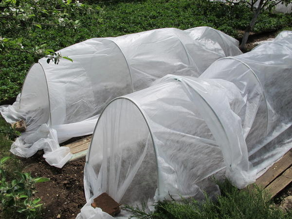 Защитить растения от заморозков помогут простые сооружения вроде парников