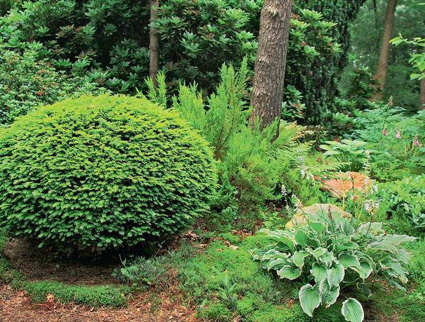 Низкорослые кустарники с шаровидной формой кроны идеально впишутся в контекст «лесного сада».