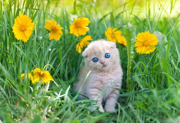 Я пушистый маленький котенок, не ловил ни разу я мышей