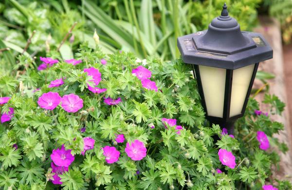 Установите садовые светильники