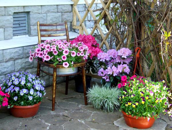 Автор статьи moysad мой прекрасный сад