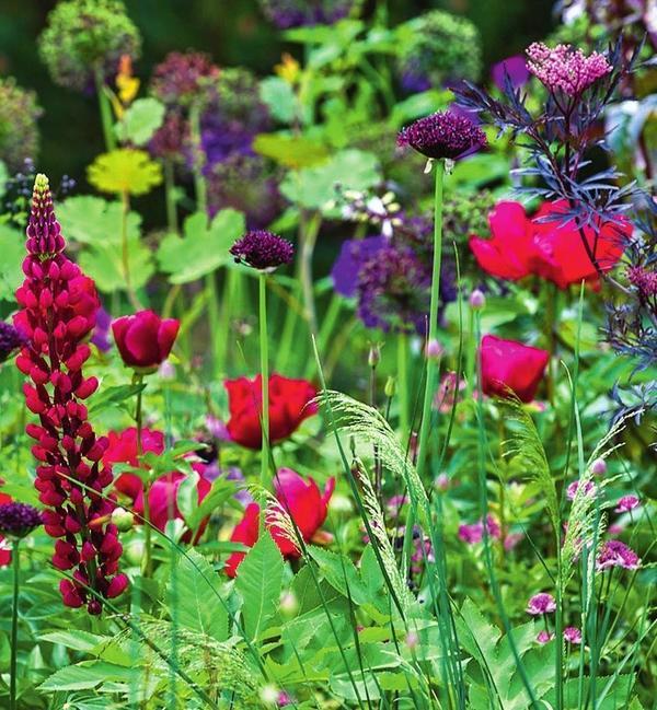 Темно-красный и фиолетовый цвета придают саду некую экспрессию
