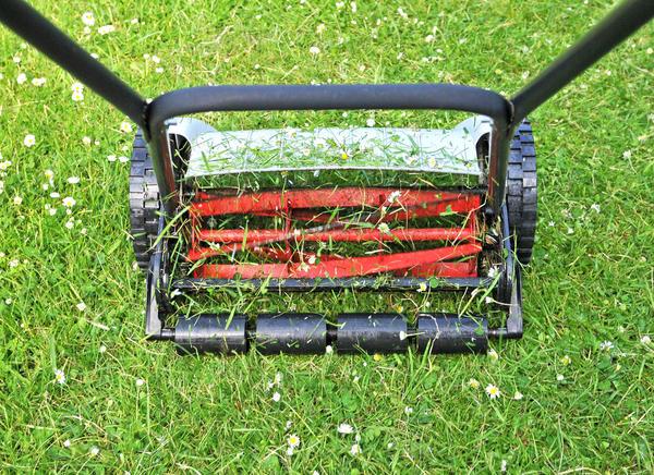 Подравнивайте газон раз в 1-2 недели