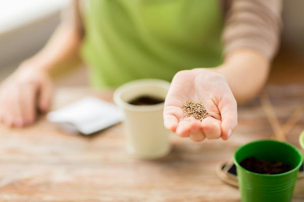 Если семена не просохли, то в тепле они нагреваются, покрываются плесенью и портятся.